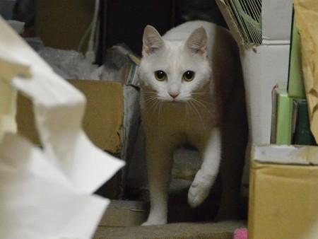 2015年4月29日のシロちゃん(2歳)