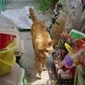 写真: 2009年05月10日の茶トラのボクチン(5歳)