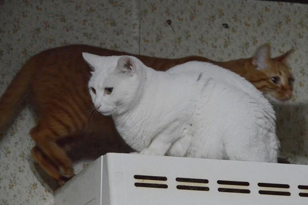 写真: 2015年5月11日のシロちゃんとトラちゃん