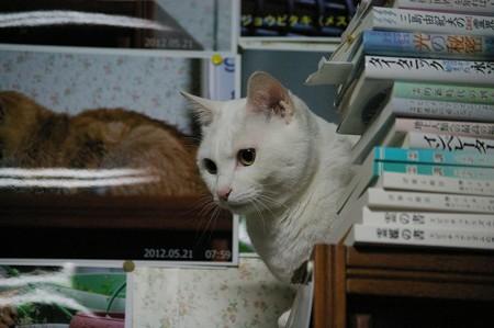2015年5月19日のシロちゃん(2歳)