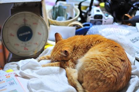 2011年05月27日の茶トラのボクチン(7歳)