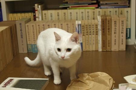 2015年5月28日のシロちゃん(2歳)