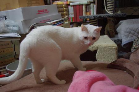 2016年5月28日のシロちゃん(雌3歳)