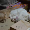 Photos: スコちゃんとシロちゃん(雄と雌各3歳)