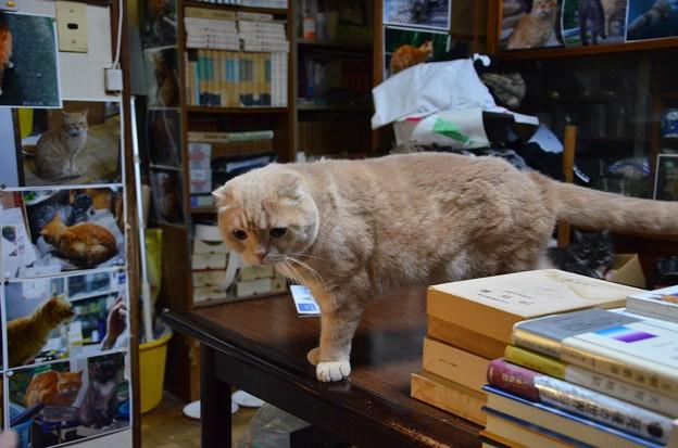 Photos: 2016年8月20日のスコちゃん(雄3歳)