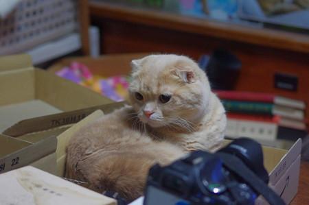 2016年10月17日のスコちゃん(オス3歳)