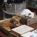 写真: 2016年11月14日のトラちゃん(メス3歳)とシロちゃん(メス3歳)