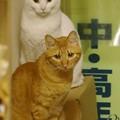 写真: 2017年2月25日のシロちゃんとトラちゃん(雌3歳)