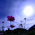 Photos: 太陽とにらめっこ