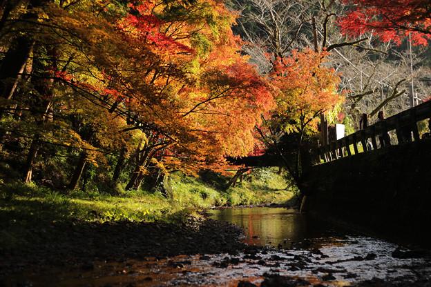 晩秋の陽燦々と