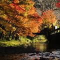 写真: 晩秋の陽燦々と