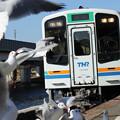 写真: 上り列車ゆりかもめ舞う