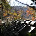 写真: 瓦越しの風景