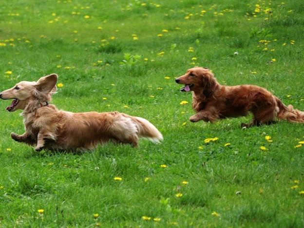 Photos: 草原を駆ける
