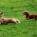 写真: 草原を駆ける