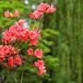 Photos: 新緑の滝に咲く