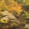 写真: 黄色の秋を見つけた