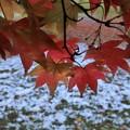 写真: 初雪と紅葉