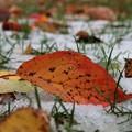 写真: 初雪の日