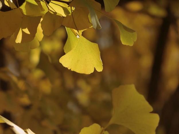 写真: 黄色の時