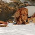 写真: 雪の上の散歩だワン!