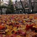 裏庭の絨毯
