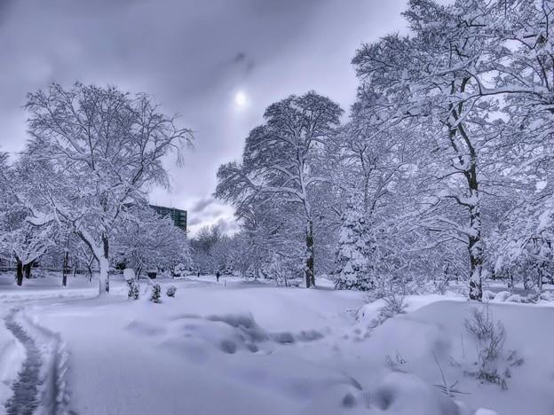 大雪のWhite X'mas