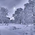 写真: 大雪のWhite X'mas