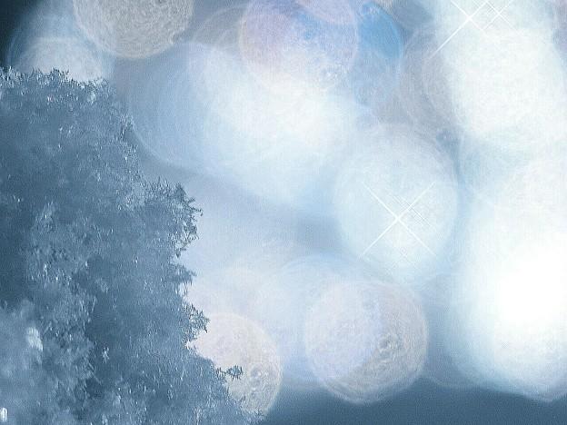 寒い1日~真冬日(・_・;)