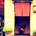 Photos: お洒落ない和風居酒屋