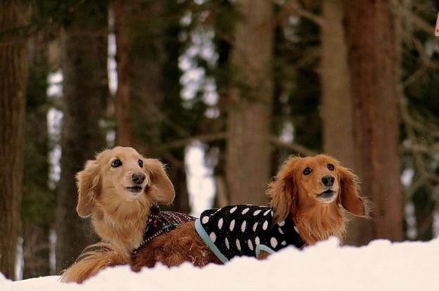 Photos: 森の中のふたり~自然が大好き~♪