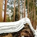 写真: 菱餅かミルフィーユの様な3月の積雪~(^o^;