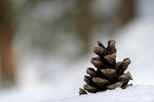 Photos: 雪解けが進と.....ゴジラの尻尾が出て来る(◎-◎;)