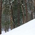 アラレの様な雪が降ってます~(◎-◎;)
