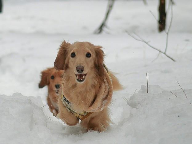冬に逆戻り~愛犬達は大喜び~♪