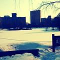 写真: 雪解け間近の~北の空へ向かい~うへへへへぇ~♪