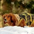 Photos: 冬から春と変わる~4月の残雪の中で(´▽`)ノ