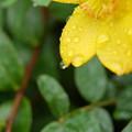 雨上がりの残り香