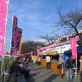 墨田公園 2017桜まつり