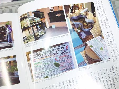 月刊錦鯉2月号の小西養鯉場...