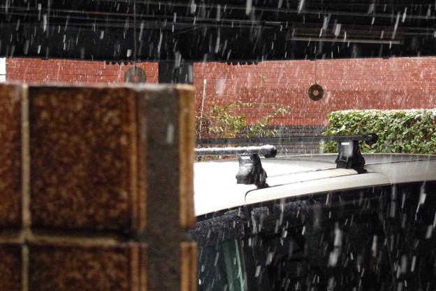 2016.11.24都内の初雪、未だ「受験シーズン」ではないのに…。