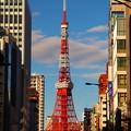 写真: ビルの谷間の東京タワー