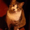 写真: 冬猫ふんわりと、不思議そうに…