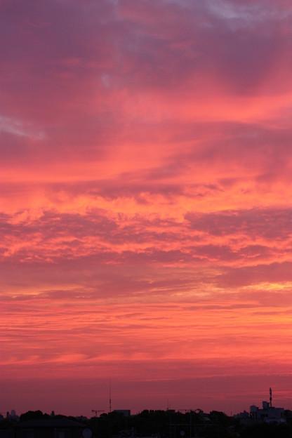 Photos: 朝日が染める色