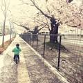 Photos: 花散らしの風