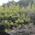 Photos: 麓の竹林