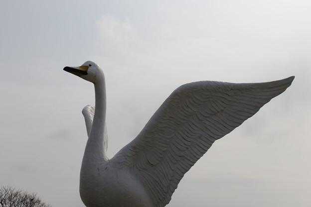 白鳥は悲しからずや