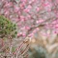 春の訪れ♪