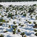 写真: 11月の積雪