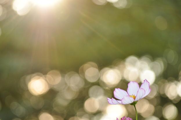 写真: 秋の陽の煌き